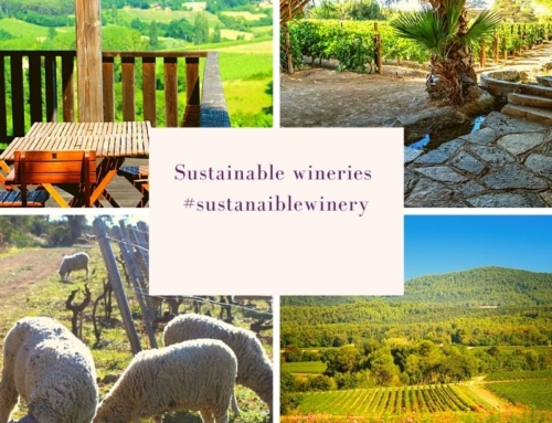 Wineries where environment is really important